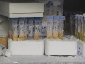 Testtubes in freezer